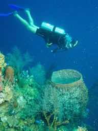 Sue diving