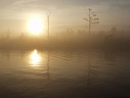 Sepia Fog
