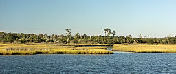 Beautiful Marshes