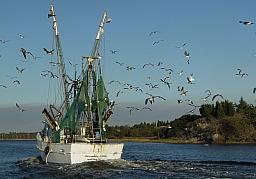 Fishing Boat & Birds